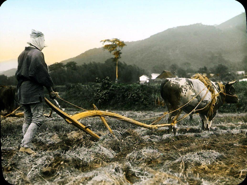 Farmer at work by Futaba || Lantern slides collection