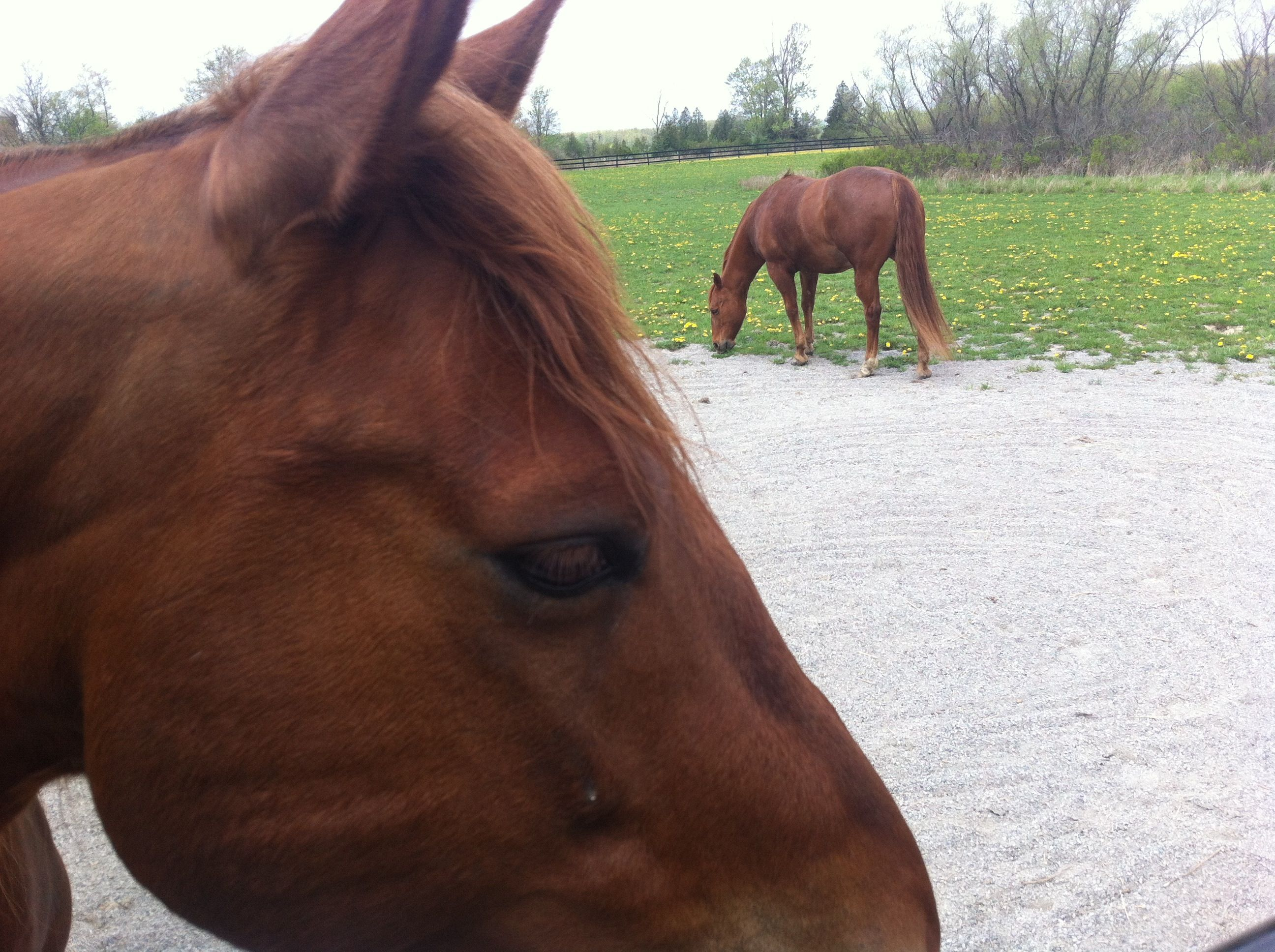 """Love horses - """"There's nothing like munching grass with your buddy!"""""""