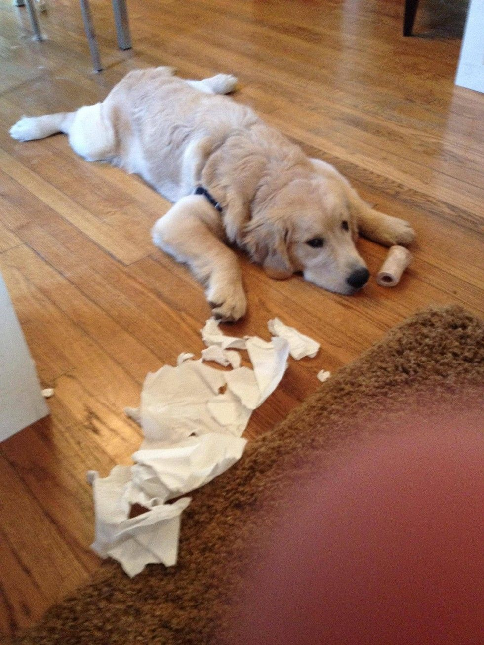 12 Totally Innocent Dogs Caught In The Act Guilty Dog Funny Dog
