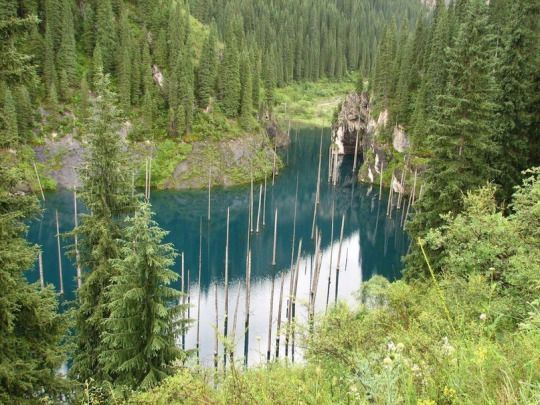 Sunken forest   Kaindy lake, Kazakhstan   Затонувший лес   Озеро Каинды, Казахстан