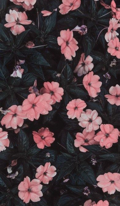 35 Most Beautiful Flower Wallpapers