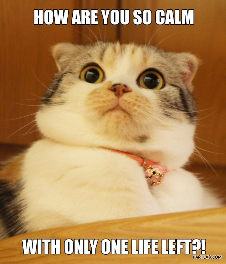 How Are You So Calm Kitten Funny Animals Funny Pictures Cats