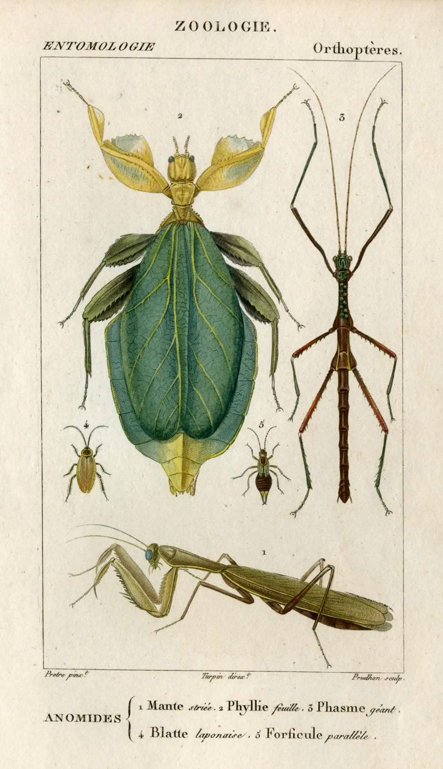 1816 insects original antique framed print engraving ready to hang