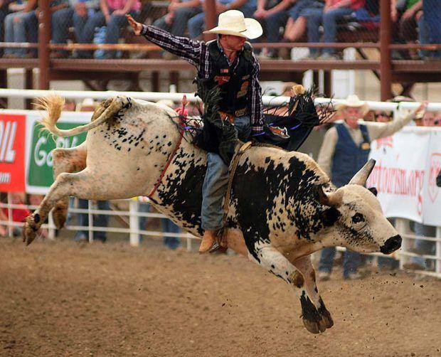 Bullriding Bull Riding Bullrider Rodeo Photos Bull Riding Bull Animals