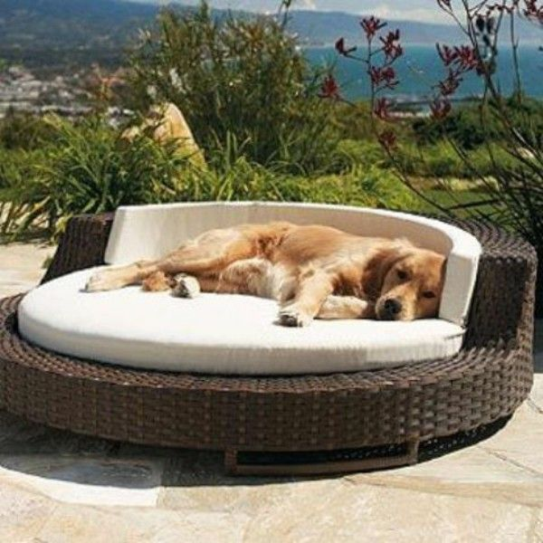 Magnificent Dog Bed For Outdoor Rattan Chair Pet Products For Them Interior Design Ideas Tzicisoteloinfo