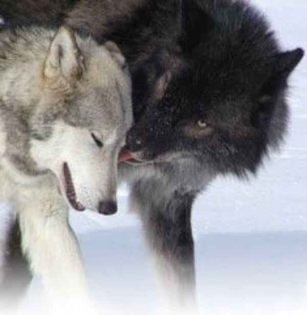 A Werewolf mess (bxb) - CHAPTER 5
