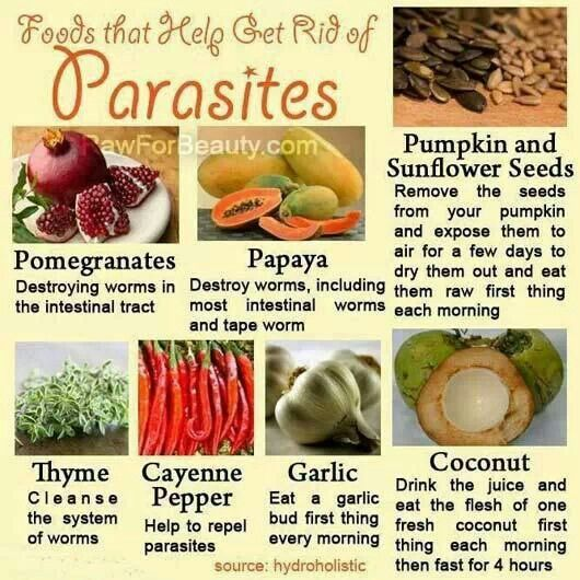 giardia cleanse diet
