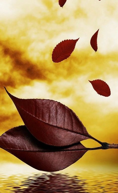 Most Beautifull Leaves Water Mobile Hd Wallpapers I Redd It Submitted By Anasnews To R Iwal Mobile Wallpaper Phone Wallpaper Images Hd Wallpapers For Mobile Best images about wallpaper