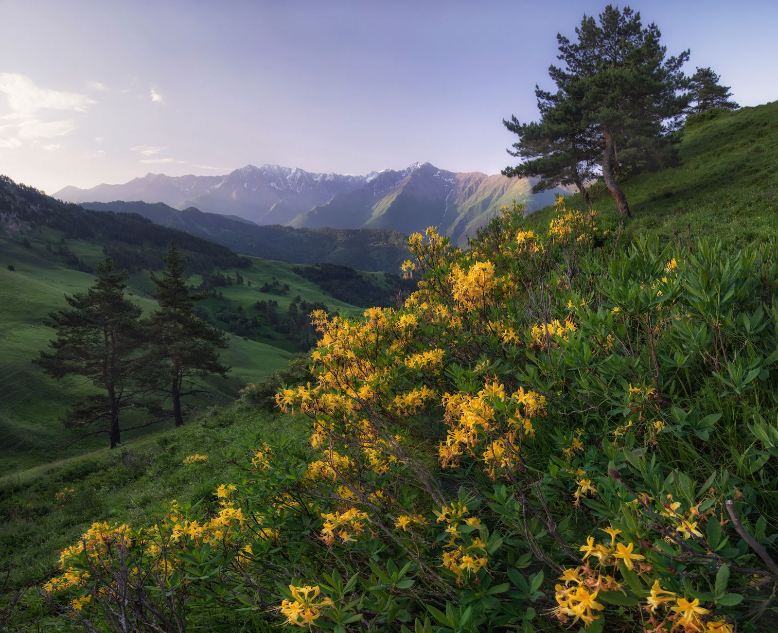Summer wildflowers in the Caucasus (Erzi Reserve ...