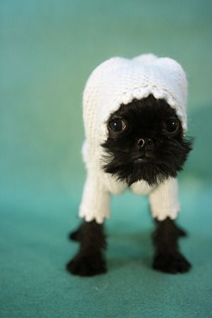 I <3 animals in sweaters!!