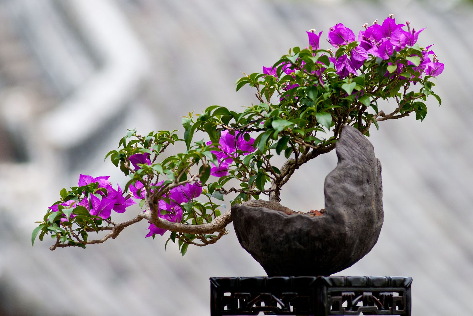 What is the Best Bonsai Advice For Beginners.Find local #gardening lessons at [EducatorHub.com]