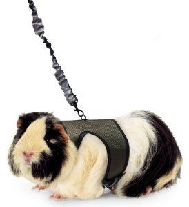 Pin On Guinea Pig Toy Play Ideas