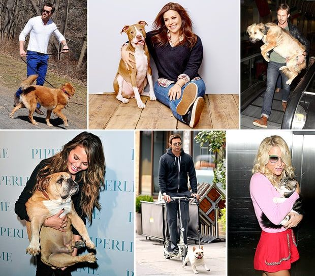 Celebrities And Their Pets With Images Elderly Dog Care