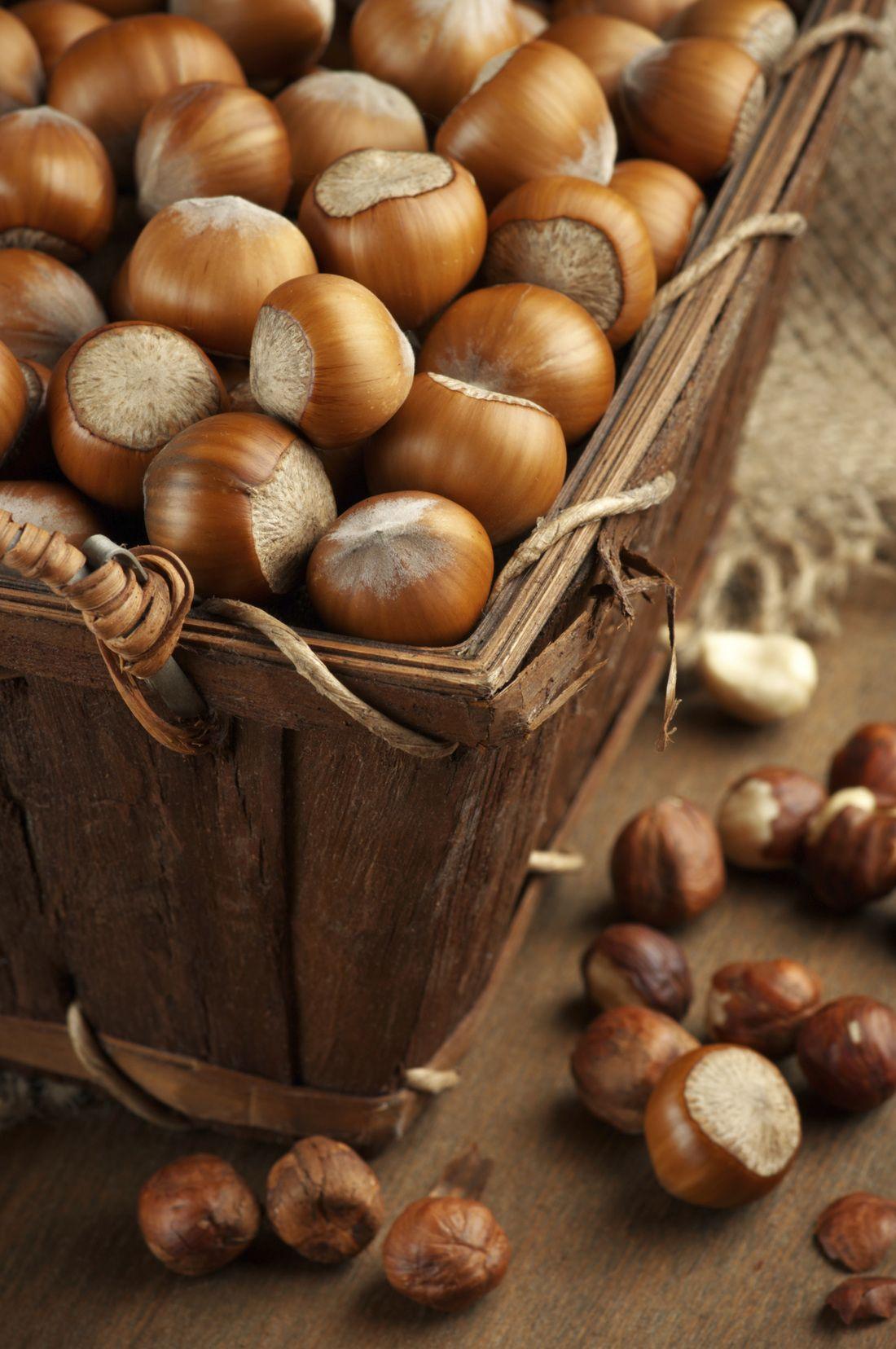 Hazelnuts in their shells decadent chocolate hazelnut food