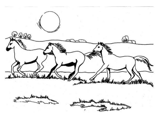 Coloriage Chevaux Sauvages Galopants Horses