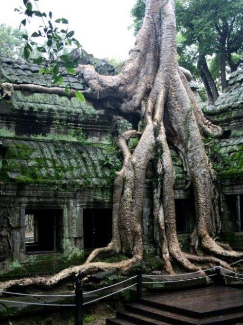 Los Lugares Abandonados Más Increíbles Del Mundo Ta Prohm En Camboya Lugares Abandonados Lugares Raros Lugares Misteriosos