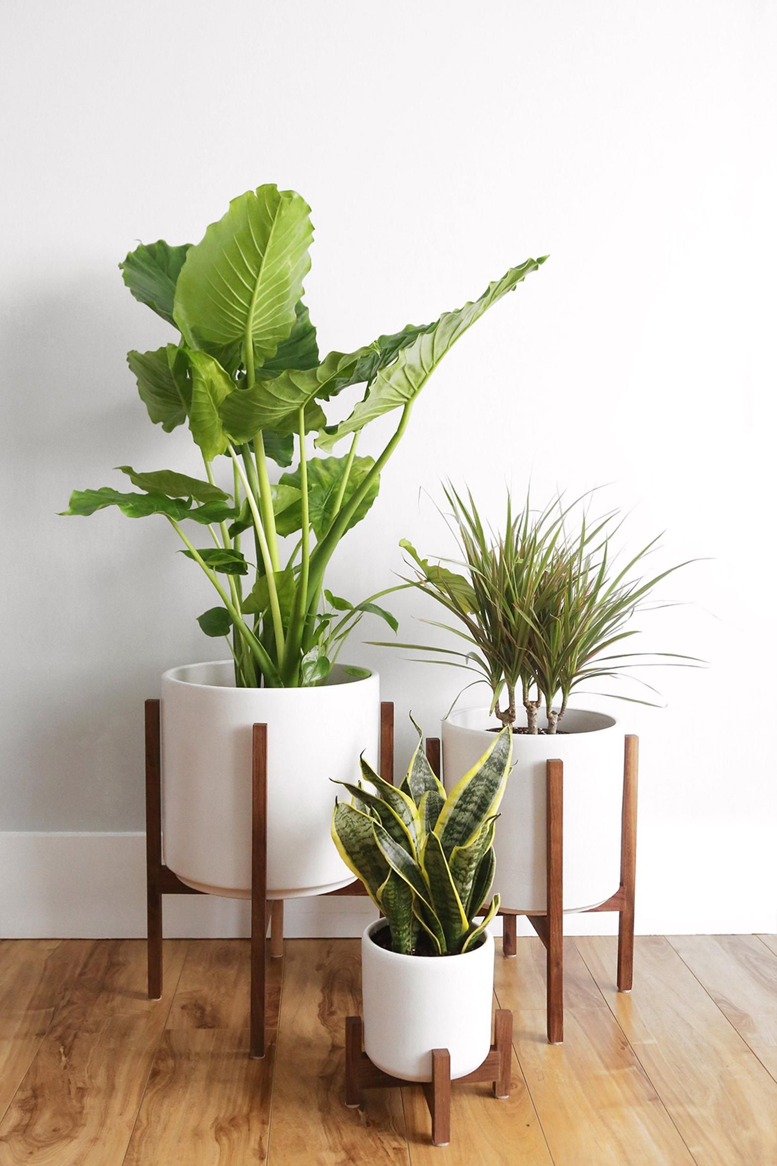 "Medium Mid Century Modern Planter, Wood Plant Stand, Ceramic Plant Pot and Reversible Planter Stand - 10"" Ceramic Cylinder Pot"