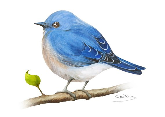 Bluebird Painting Watercolor Bluebird 5 X 7 Print Watercolor