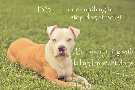 Pin By Sheri Meade On Punish The Deed Not The Breed Bully Breeds Dogs Dog Attack Bully Breeds
