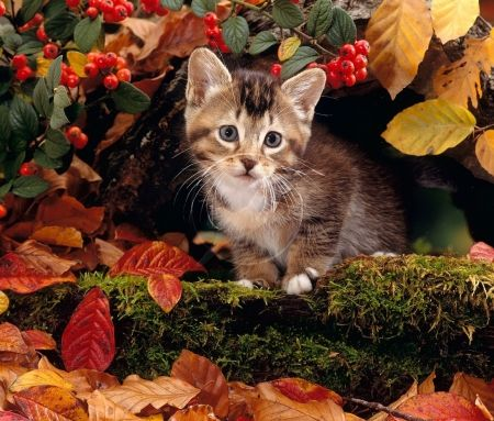 Quot Sweet Autumn Kitty Quot Cats Amp Animals Background