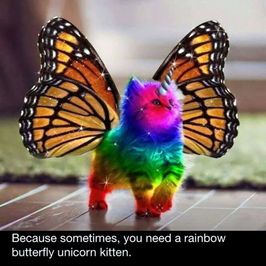 Pin By Jessica Galassie On Humor From My View Rainbow Butterfly Unicorn Kitten Rainbow Butterfly Unicorn