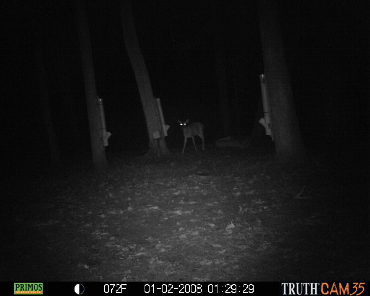 New deer feeder r working