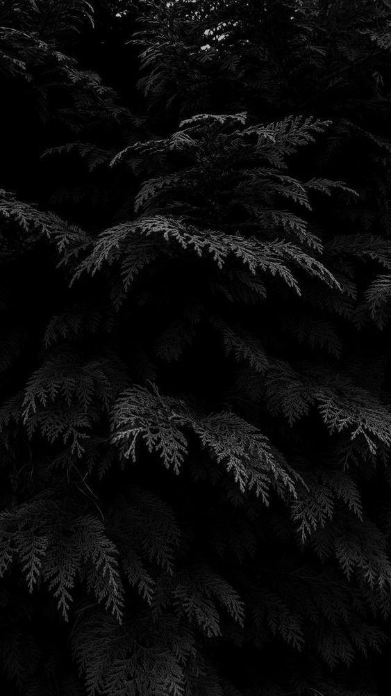 Black Plants #wallpaper #lockscreen from rebelinanewdress.com