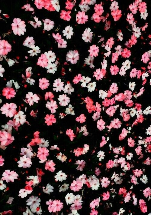 Fondos De Flores Margaritas Tumblr