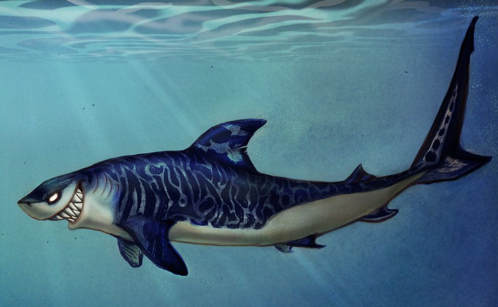 Tiger Sharks Drawings Hd Wallpaper Background Images Shark Drawing Drawing Wallpaper Tiger Shark