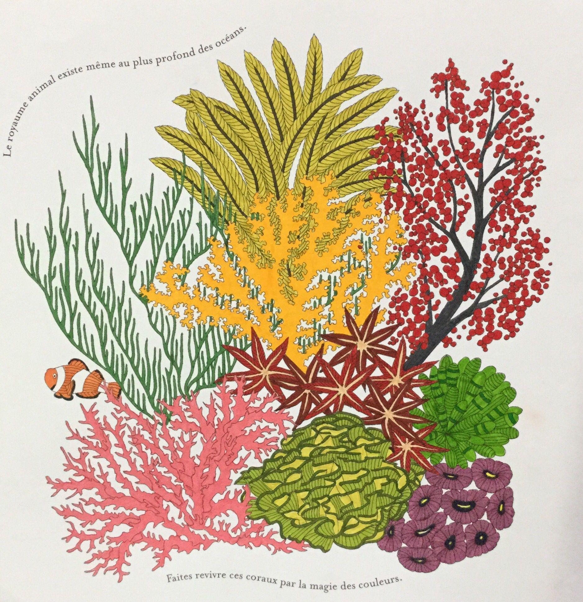 Colouring Millie Marotta Seaworld Coral Coraux Mer