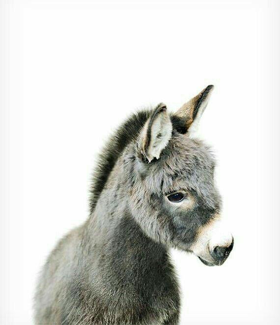 Pin Von Miriam Meinhard Auf Cutiess Baby Esel Tiere Und Tierbabys