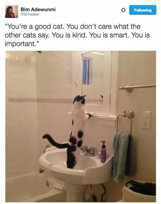 Cat Memes So Funny We Could Just Cry Always Pets Cat Memes Funny Cat Memes Best Cat Memes