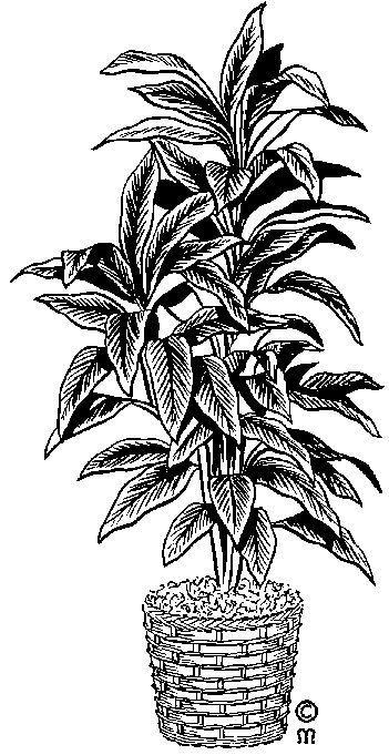 Img dessins cliparts de plantes fleurs arbres plante verte for Arbres plantes fleurs
