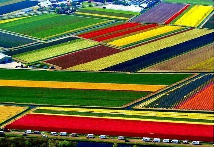 Champ de tulipes netherland