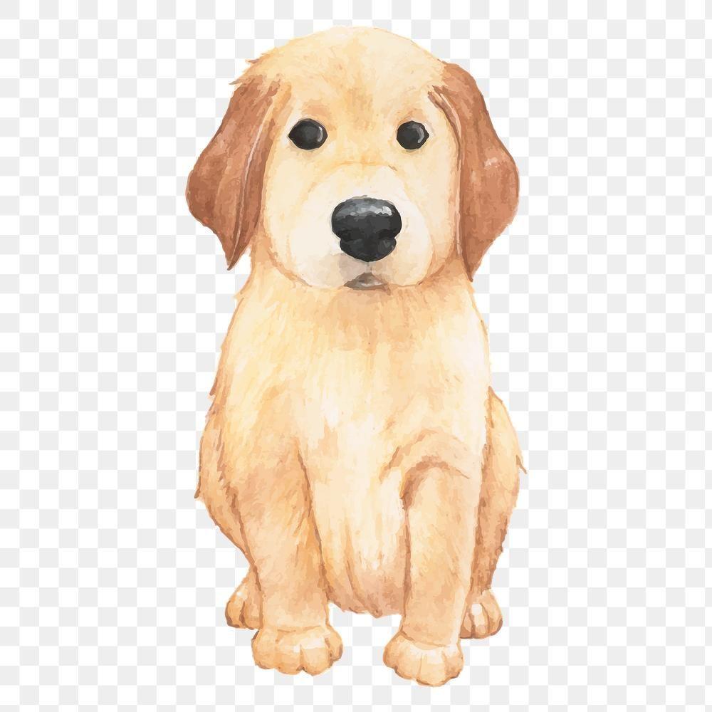 Golden Retriever Dog Png Premium Image By Rawpixel Com Aum Dogs Golden Retriever Golden Retriever Retriever