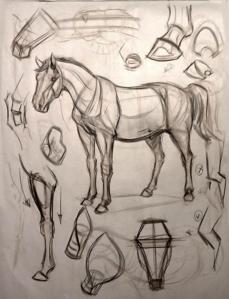 Image result for horse anatomy drawing | Tutorials | Pinterest ...