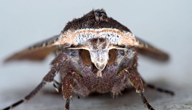 Moth Eyes Inspire More Efficient Thin Film Solar Cells Solar Cell Best Solar Panels Solar Power House