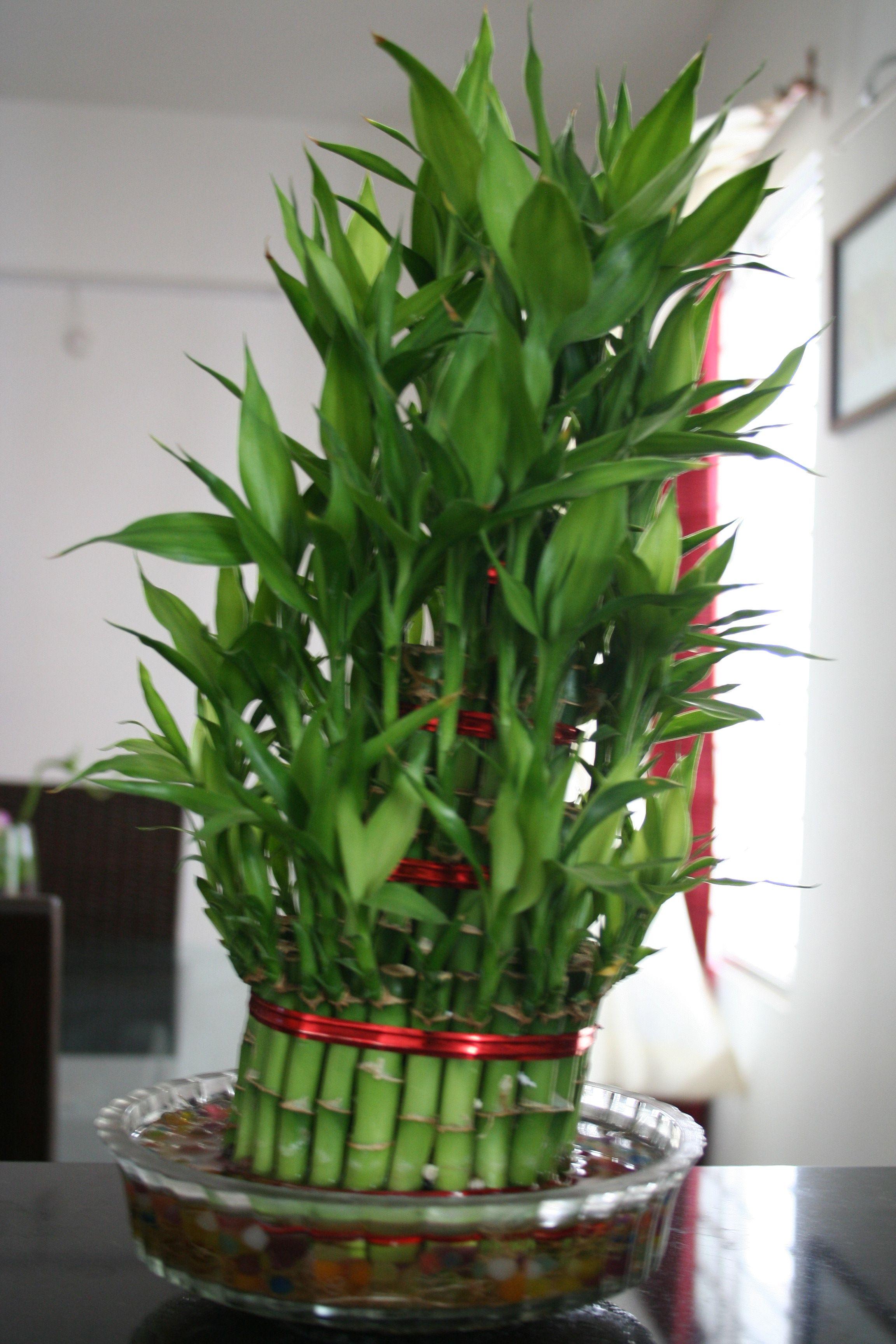 Image Detail For  Indoor Plants!