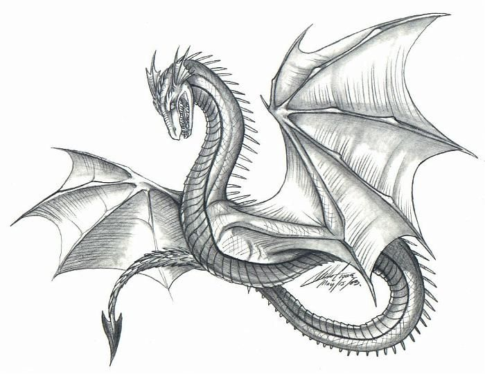 Dragon drawings in pencil dragons drawings laura campbell