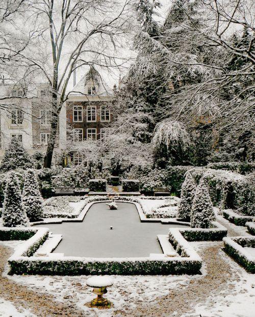 Elegant wintery backyard