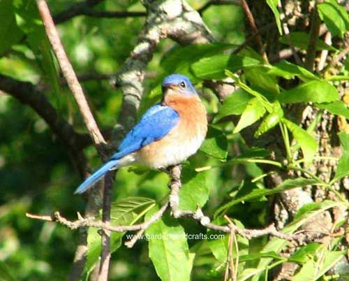 Merveilleux How To Attract Bluebirds In Your Yard  Http://gardensandcrafts.com/tips_attractingbluebirds