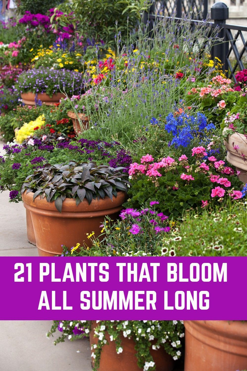 21 Plants That Bloom All Summer Long