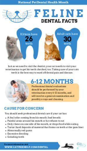 Feline dental facts. #NationalPetDentalHealthMonth #dentalfacts