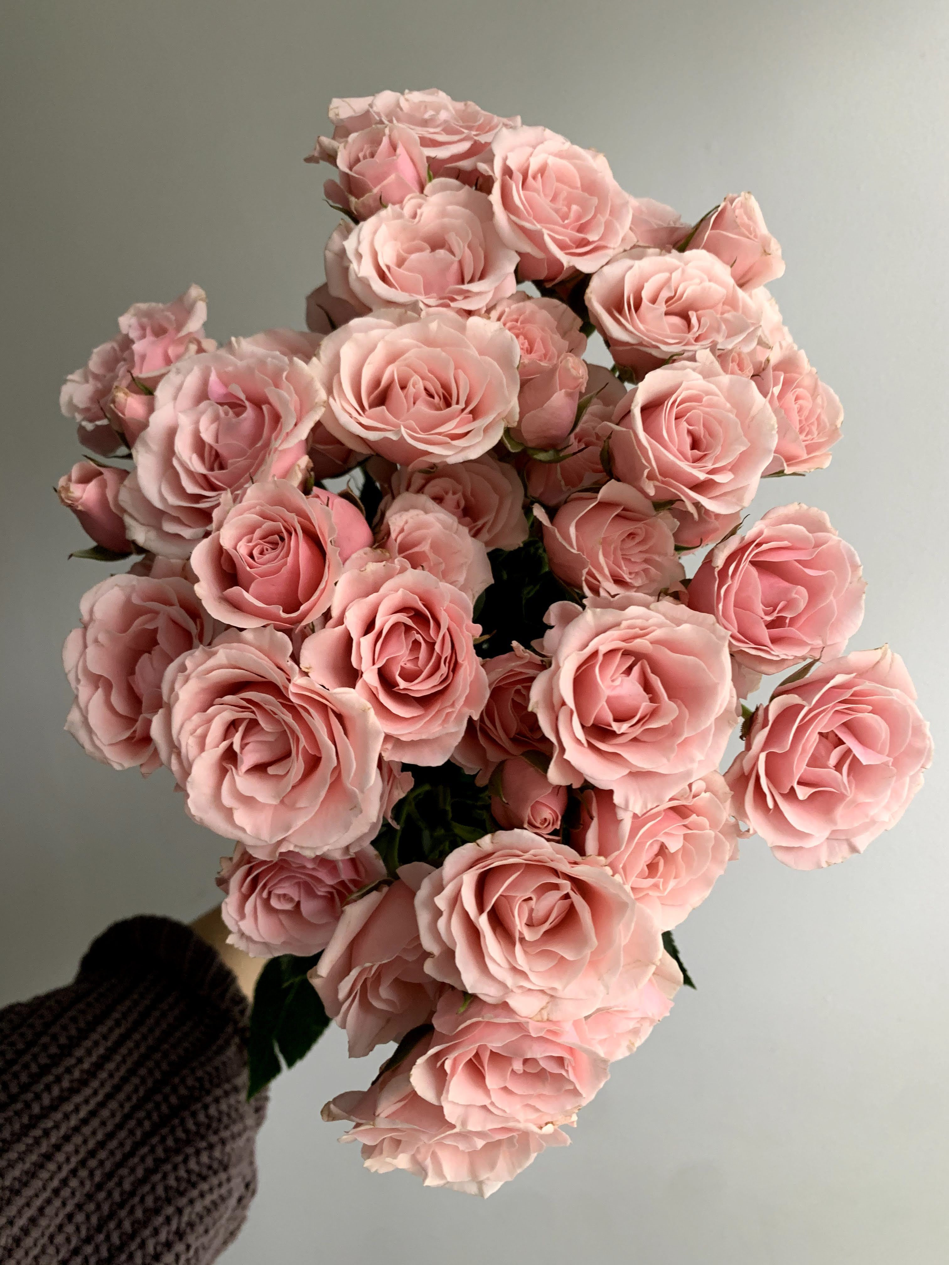 Pink Majolica Spray Roses In 2021 Light Pink Flowers Pink Rose Bouquet Fresh Flower Bouquets