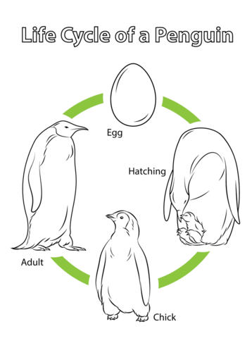 life cycle coloring pages - life cycle of a penguin coloring page from penguins