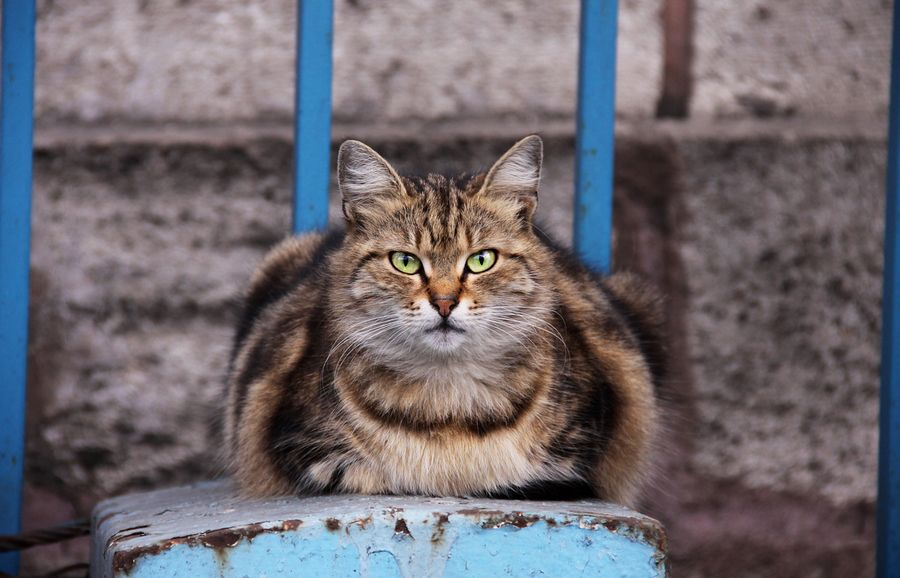 Boss of street cats by Tural Revo, via 500px.