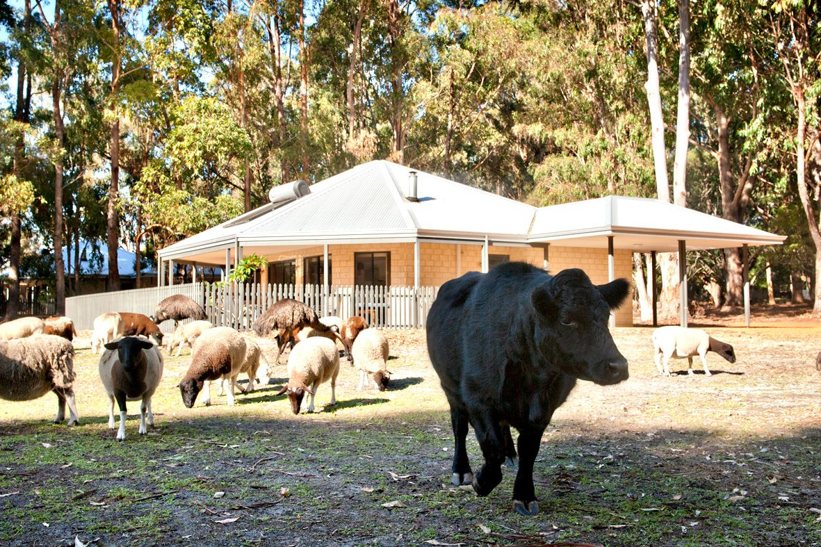 Margaret River Hideaway Farmstay Animals Are Friendly Roam Freely Around The Property Farm Stay Hideaway River