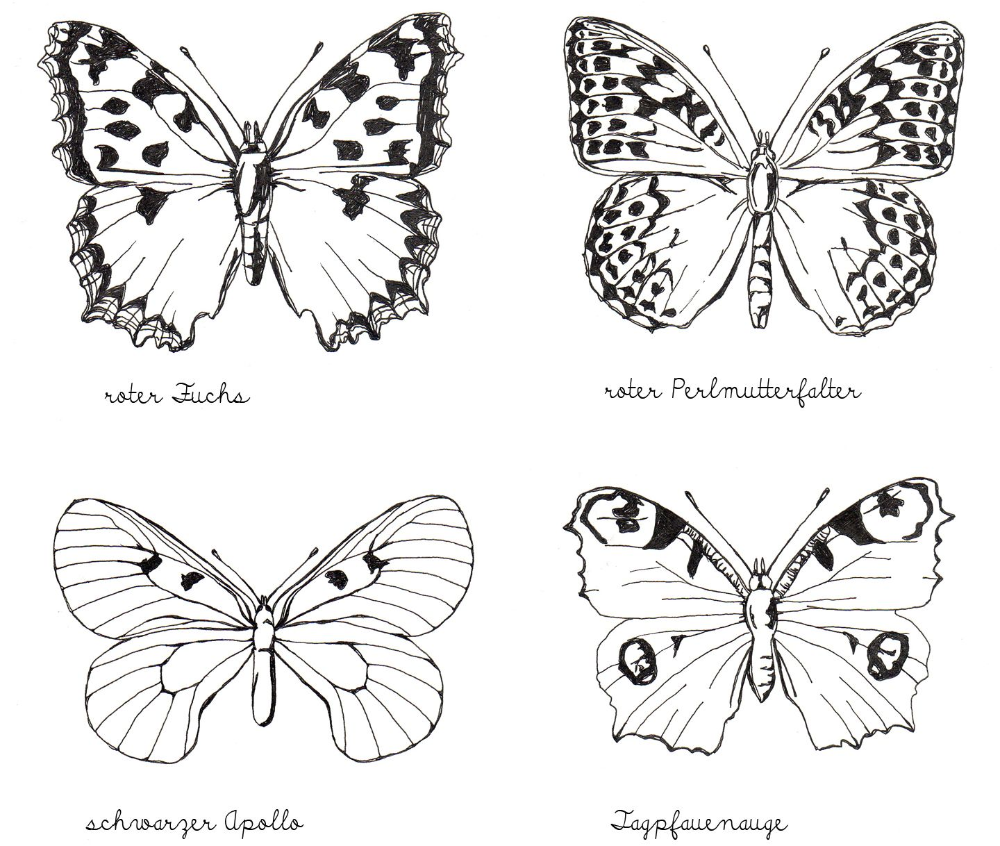 Illustration: Schmetterlinge gezeichnet | Schmetterling | Pinterest ...
