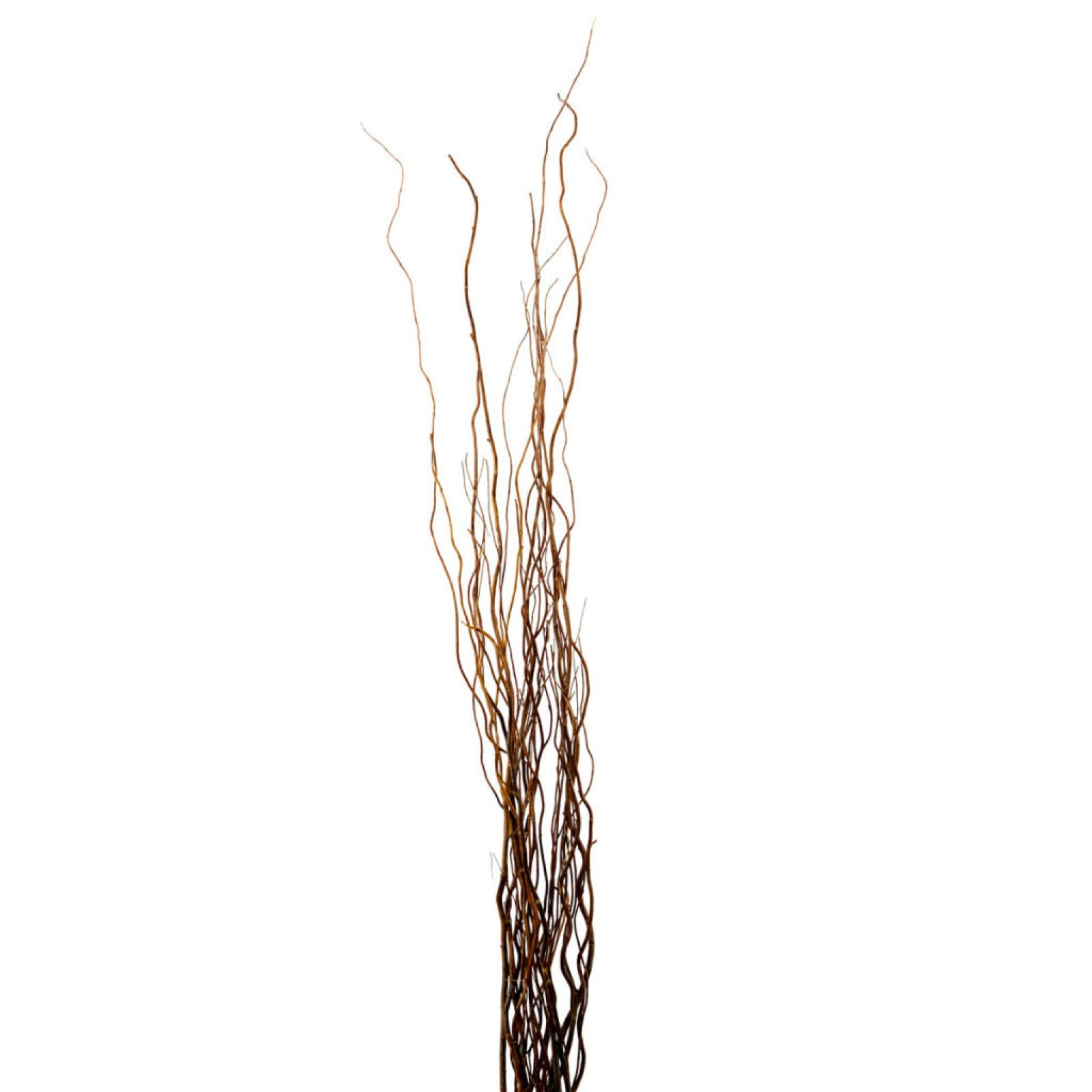 Natural Curly Willow By Ashland Curly Willow Floor Vase Ashland