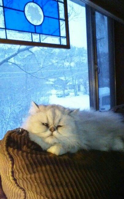My #1 cat lover!!